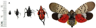 Spotted Lanternfly Lecture - BIA Spring Homeshow